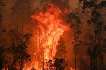 Lifford native urges public to donate to Australian bushfire relief funds